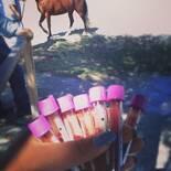 muestreo equinos