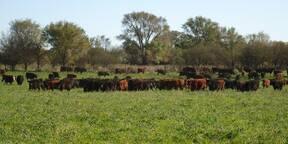 alfalfa en La Pampa