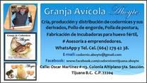 Granja Avícola Aboyte.  &  Incubadoras Aboyte.
