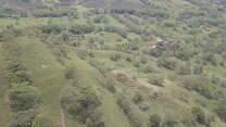 Programs lecheros con arborización 1000 msnm