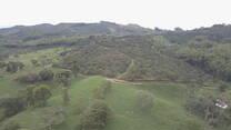 Aguacate y Lechería especializada 1250 msnm