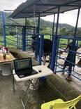 trabajo de palpacion seguimiento con Software Ganadero sg