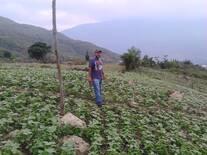 Plantaciones de Caraota