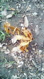 planta muerta repentinamente