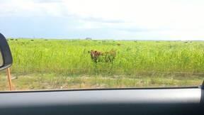 Sudangrass en verano 2013