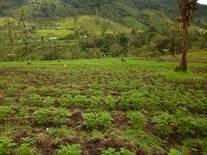 potecncialicemos nuestros suelos