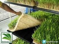 Forraje Verde Hidropónico - Aplicativo