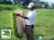 Forraje Verde Hidropónico - NutriForraje App