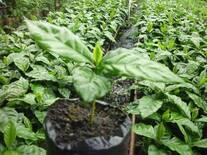 la fertilización  es fundamental en la calidad del vivero.