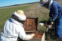 apicultura familiar