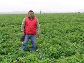 Tecnico en produccion de hortalizas