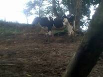 En rancho alta mira