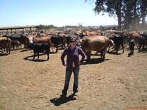 Selección toros