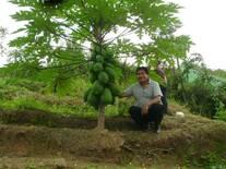 Producción de Papaya en pichanaki