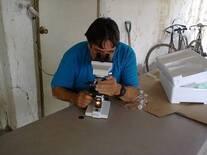 evaluación del semen en campo