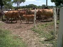 rancho sebastopol-2