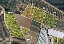 Uso imagenes satelitales para conteo plantas