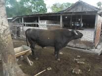 Toro E9 CONGO