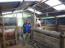 Mini granja porcinos - Molino pampa - CHACHAPOYAS