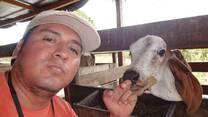 Edificación - sala de terneraje - ganado lechero Gyr - JUANJUI