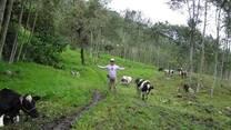 Ganado de leche Holstein - Palma central - JAEN