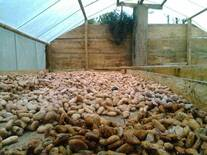 Secado de cacao en marquesina