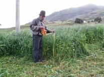 Mejoramiento de la producción de pastos