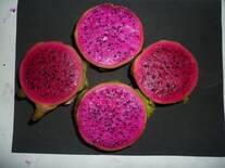 Frutos de dos genotipos diferentes de pitahayas de pulpa solferina
