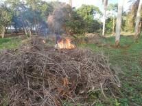 renovacion de potreros quema con fuego