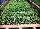 9Agricultura