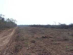 Acordonado en desmonte de parque chaqueño-argentina