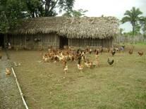 Avicultura Alternativa