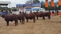 gran Campeonato hembras en la expo trebol 2014