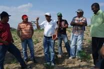 Henry conversando con un grupo de productores  y tecnicos en una plantacion de Manihot utilissima.