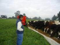 Suplementación Estratégica en vacas en pastoreo de alta producción