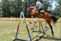 Areco Gouin Argentina Horses