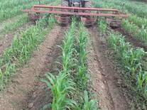 Control mecánico de maleza y drenaje de cultivo de sorgo forrajero en trópico húmedo.