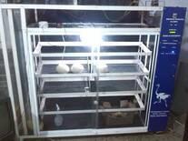 incubadora para huevos de avestruz del Profesor. Ingeniero. William Betancourt
