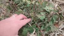 Nabon en estado vegetativo avanzado