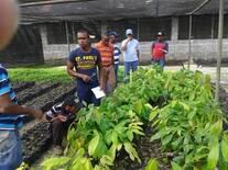 Productores observan desarrollo vivero de  cultivo decacao