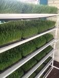 producción de forraje verde hidroponico