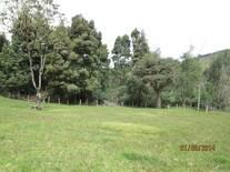 reforestacion con acacia negra y acacia japonesa en la finca los mellizos