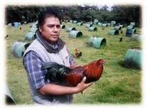 Seleccionando Reproductores, Granja Cria del Sur, México.