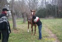 mi caballo alazan