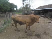 Ranchero L30