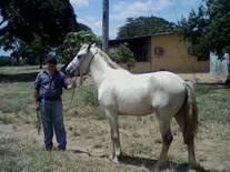 Mi Caballo de Silla