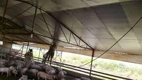 Engorda de cerdos en Jalisco, Aislamiento Caseta