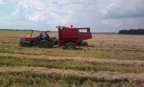 cosecha de arroz