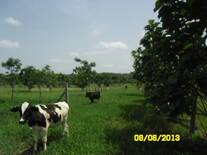 Terneros en crecimiento en pastoreo