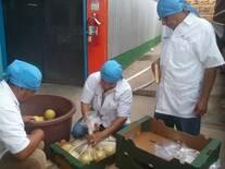 Prueba de empaque en melones